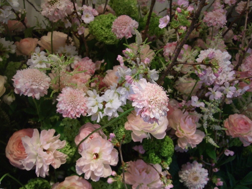 オークリーフ(桜の花畑)_f0049672_14354426.jpg