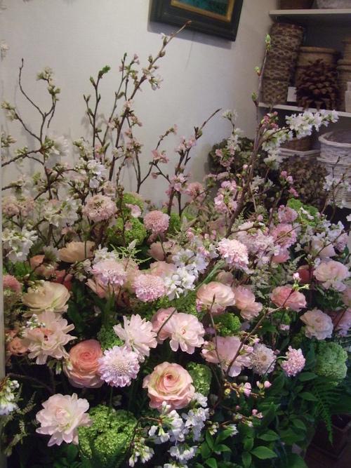オークリーフ(桜の花畑)_f0049672_14355037.jpg