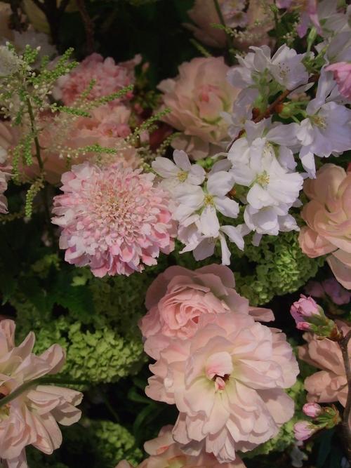 オークリーフ(桜の花畑)_f0049672_14382513.jpg