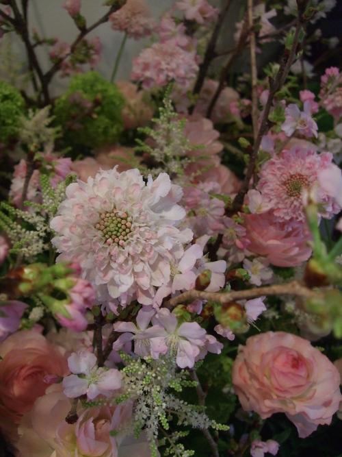 オークリーフ(桜の花畑)_f0049672_14383690.jpg
