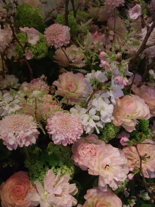オークリーフ(桜の花畑)_f0049672_14413565.jpg