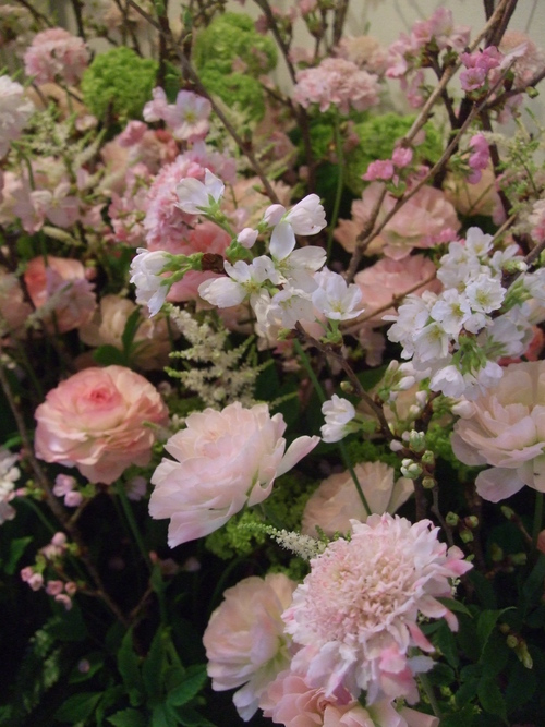 オークリーフ(桜の花畑)_f0049672_14414375.jpg