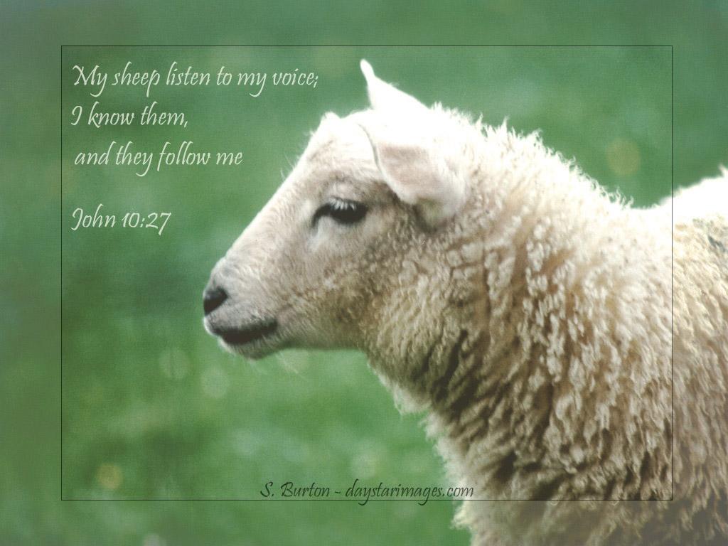 3月24日1サムエル16‐18章『神の計画は止まることはない(神は心を見ておられる)』_d0155777_05020100.jpg