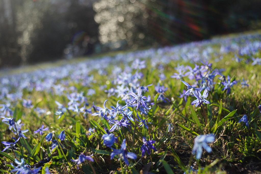 強い春の日差しと冷たい空気。_c0180686_1018308.jpg