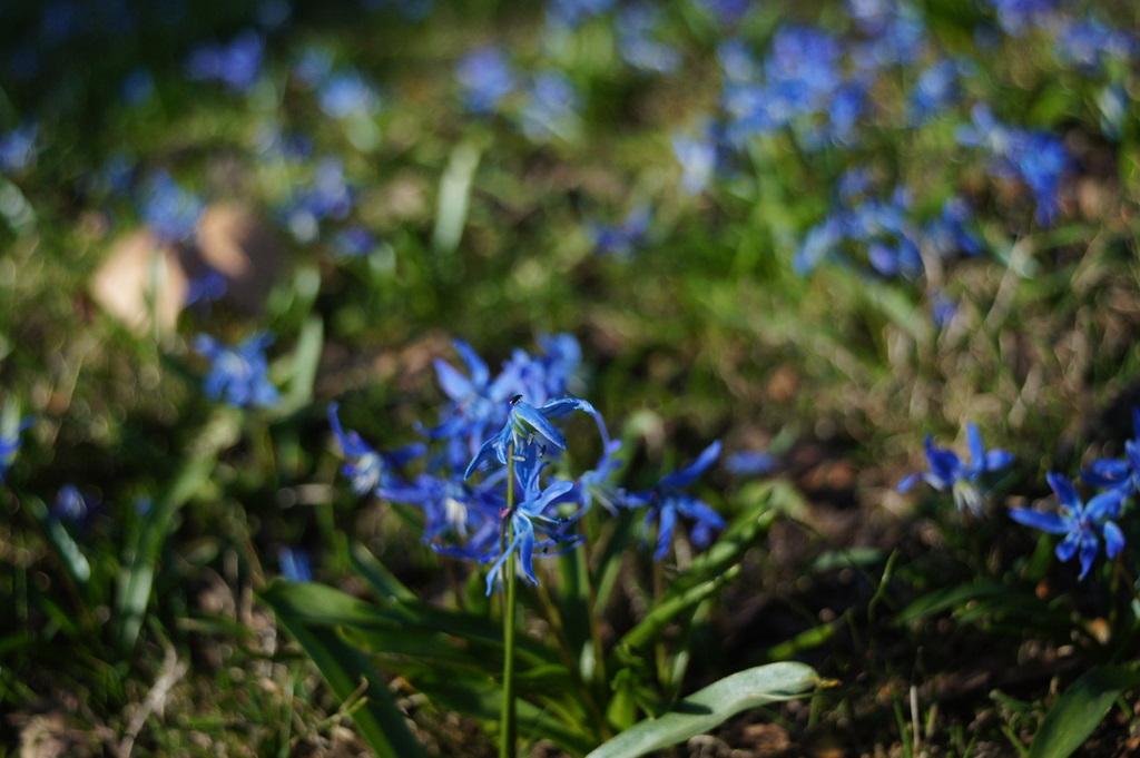強い春の日差しと冷たい空気。_c0180686_10203983.jpg