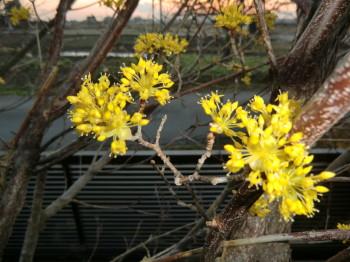 春がやってきた_b0111791_18173410.jpg