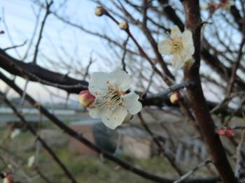 春がやってきた_b0111791_18174715.jpg