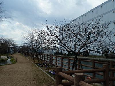 第10回アーモンド並木と春の音楽会 _b0051598_2232618.jpg