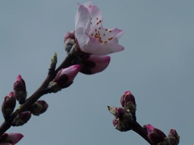 第10回アーモンド並木と春の音楽会 _b0051598_2244238.jpg