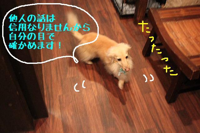 b0130018_10251920.jpg