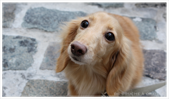 trois chiennes_d0184921_11325220.jpg
