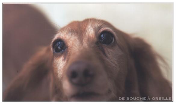 trois chiennes_d0184921_11504571.jpg
