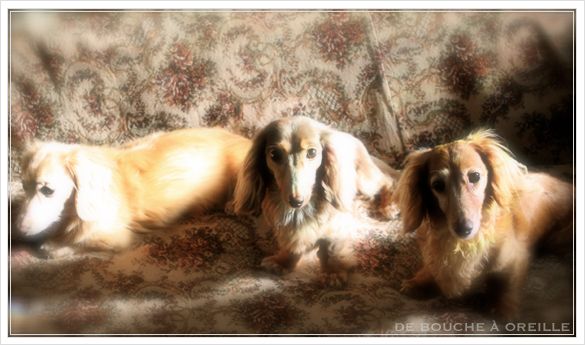 trois chiennes_d0184921_1242991.jpg