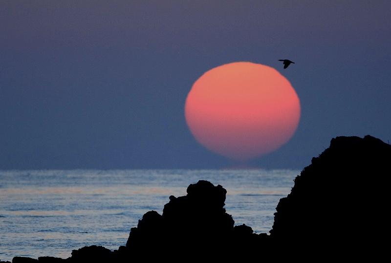 夕陽の中の鳥_d0074828_21293450.jpg