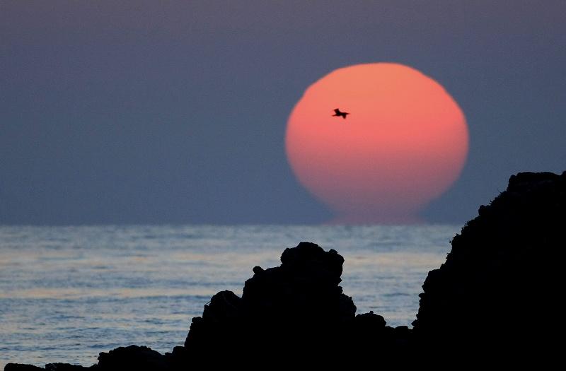 夕陽の中の鳥_d0074828_21294845.jpg