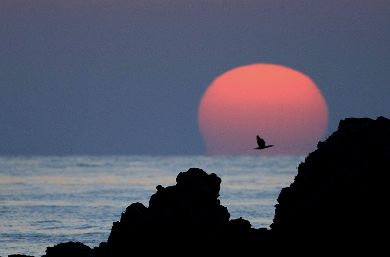 夕陽の中の鳥_d0074828_21295785.jpg