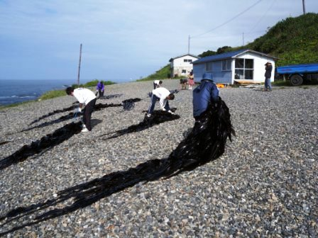 北海道えりも町「えりも地域力発掘協議会」被災地支援活動 其の二_b0206037_16455752.jpg