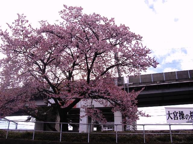 駅構内の1本だけの桜_d0116059_1441781.jpg