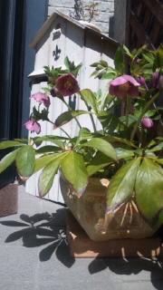 今年も咲いたよ♪_d0142770_23194653.jpg