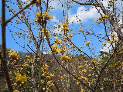 小さき花が春を告げる_b0102572_2201973.jpg