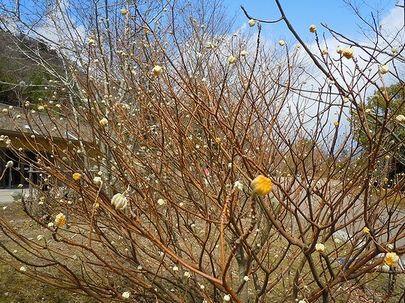 小さき花が春を告げる_b0102572_2213668.jpg