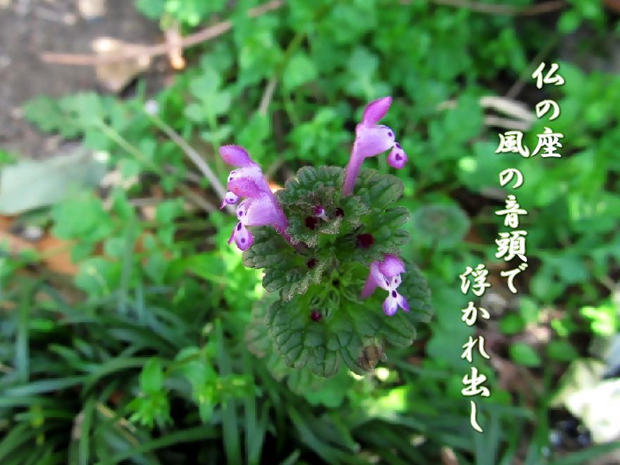f0137096_1555499.jpg
