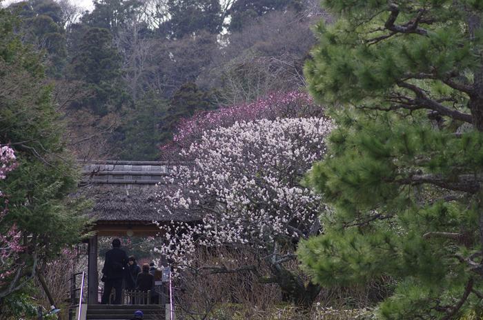 東慶寺の3月 1_b0151409_2258187.jpg