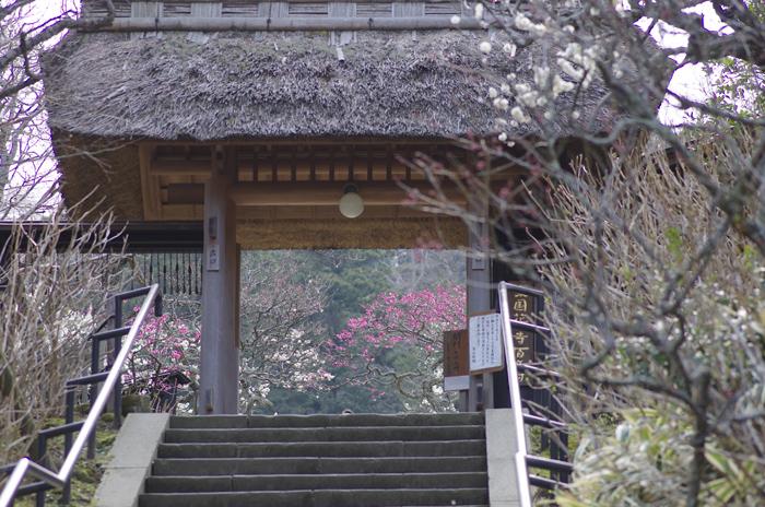 東慶寺の3月 1_b0151409_2258278.jpg