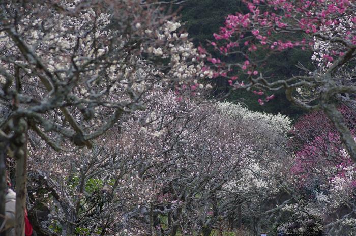 東慶寺の3月 1_b0151409_22584843.jpg