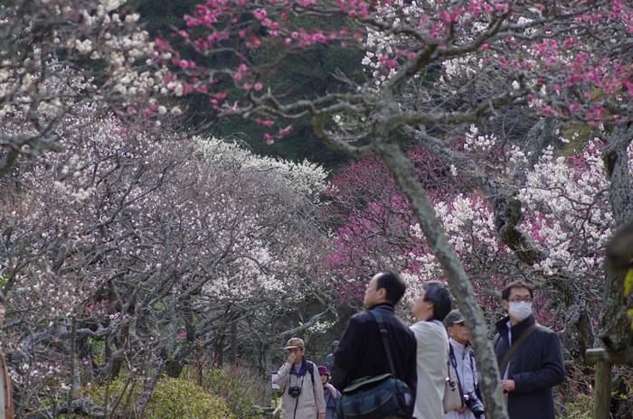 東慶寺の3月 1_b0151409_22592037.jpg