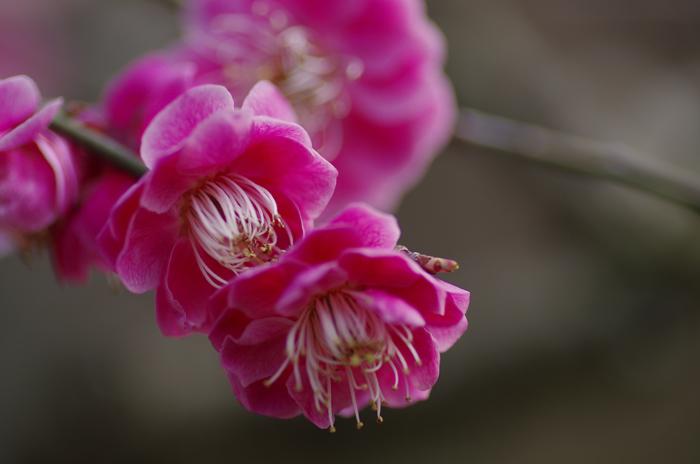 東慶寺の3月 1_b0151409_2259351.jpg