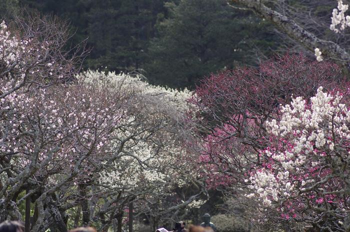 東慶寺の3月 1_b0151409_2302267.jpg