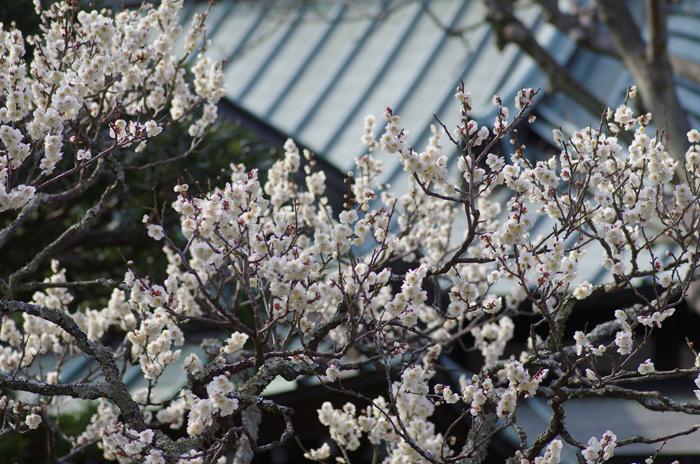 東慶寺の3月 1_b0151409_2312861.jpg