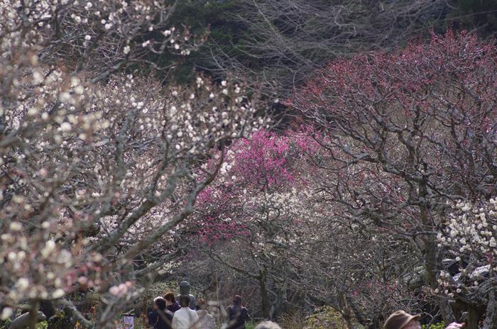 東慶寺の3月 1_b0151409_23186.jpg