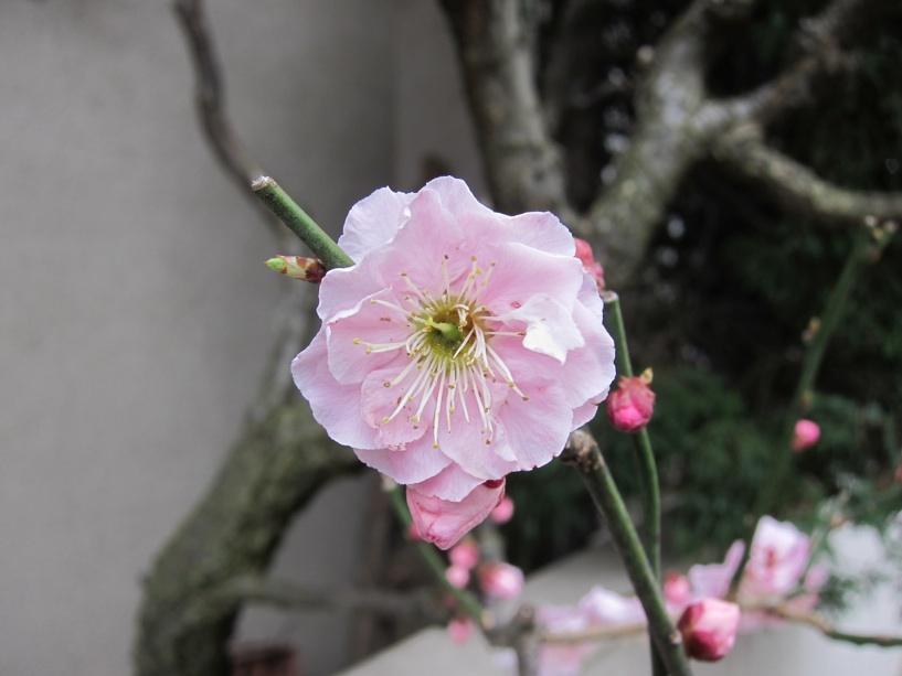 【散撮】春の訪れ?_f0141609_1974314.jpg