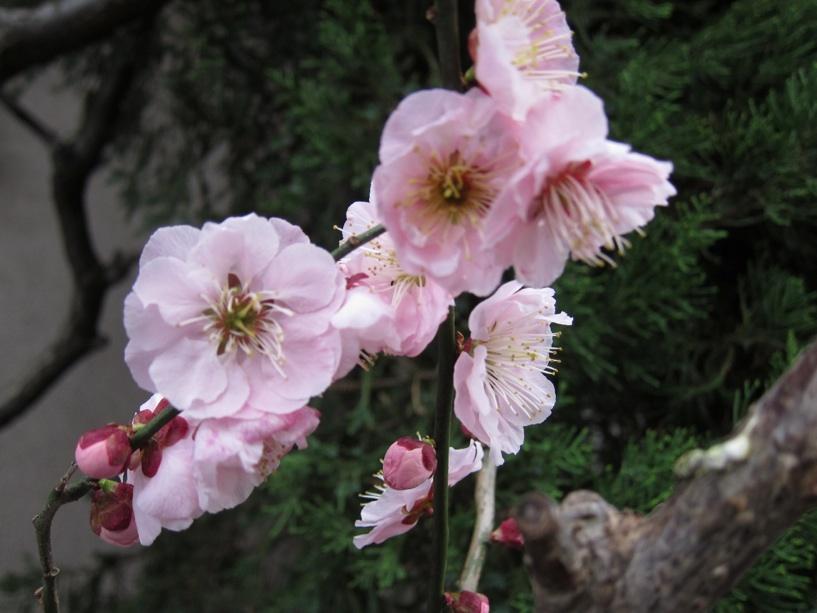 【散撮】春の訪れ?_f0141609_1975587.jpg