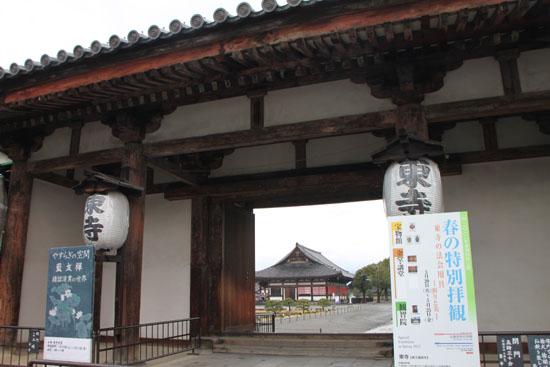 東寺 河津さくら_e0048413_2029305.jpg