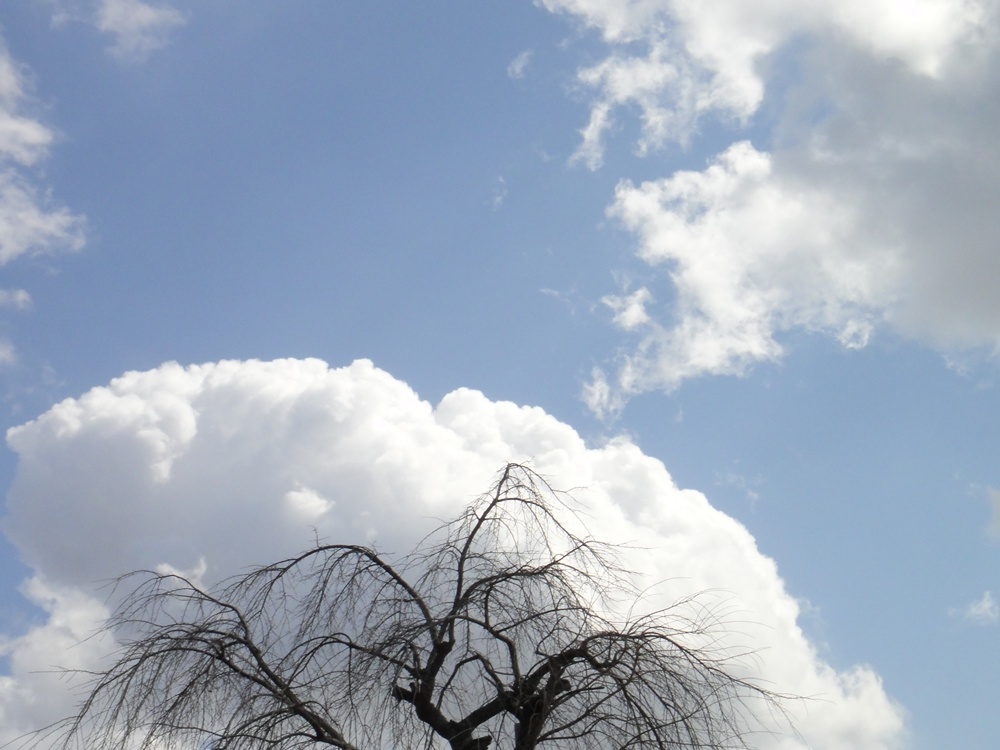 降り晴れ降り晴れ_c0111229_18114239.jpg