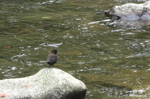 136 八重滝 ~山奥にある八つの滝~_c0211532_12584263.jpg