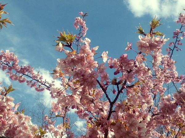 春がそこまでーー。_e0077638_1362576.jpg