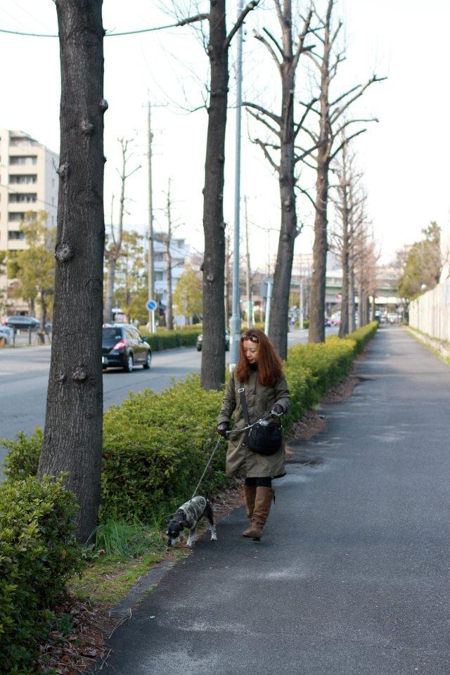 BOZZの散歩、名古屋の桜状況_e0034141_7504128.jpg