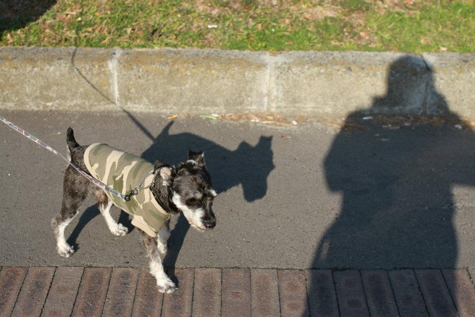BOZZの散歩、名古屋の桜状況_e0034141_752622.jpg