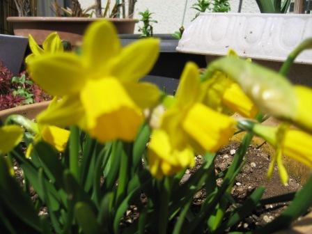 春到来?_c0206545_1259936.jpg