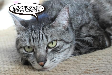 10歳のシニア猫さんと里親様のお便り_e0151545_20212934.jpg