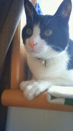 10歳のシニア猫さんと里親様のお便り_e0151545_20293621.jpg
