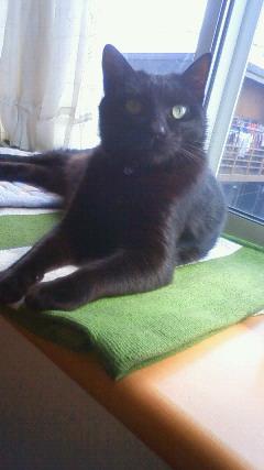 10歳のシニア猫さんと里親様のお便り_e0151545_2031199.jpg