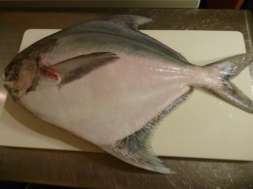 今日の魚は・・・_e0252966_1605463.jpg