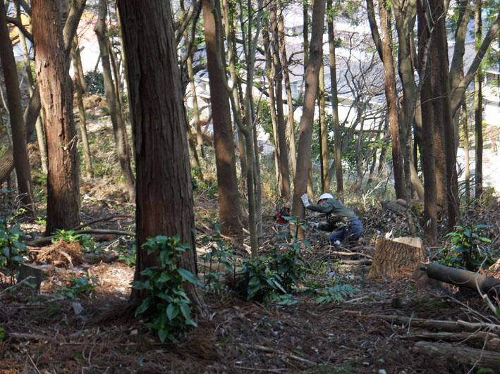 2011年度六国見山森林公園の臨時手入れ終了:3・26_c0014967_20122868.jpg