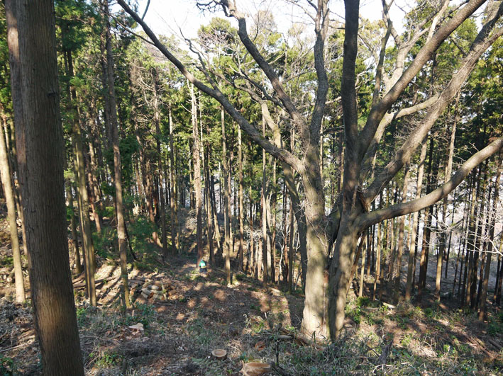2011年度六国見山森林公園の臨時手入れ終了:3・26_c0014967_2025278.jpg
