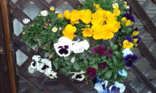 プチ便り(春祭り)_a0206870_164505.jpg